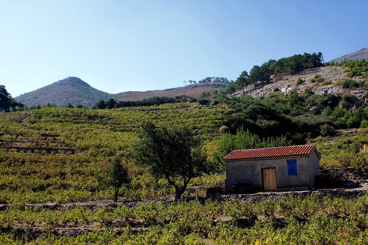 Wander Samos / Oberhalb Kokkari