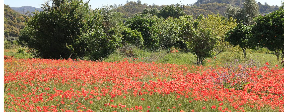 Wandern Toskana: Frühlingswiese