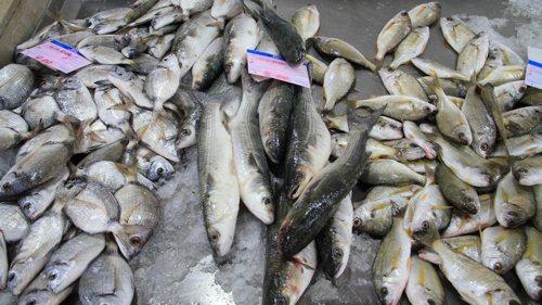 Wanderungen an der Algarve / Frischer Fisch in der Markthalle